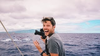sailing-tahiti-iron-wind-whales-cost-fuel-economy-of-a-catamaran-sailboat
