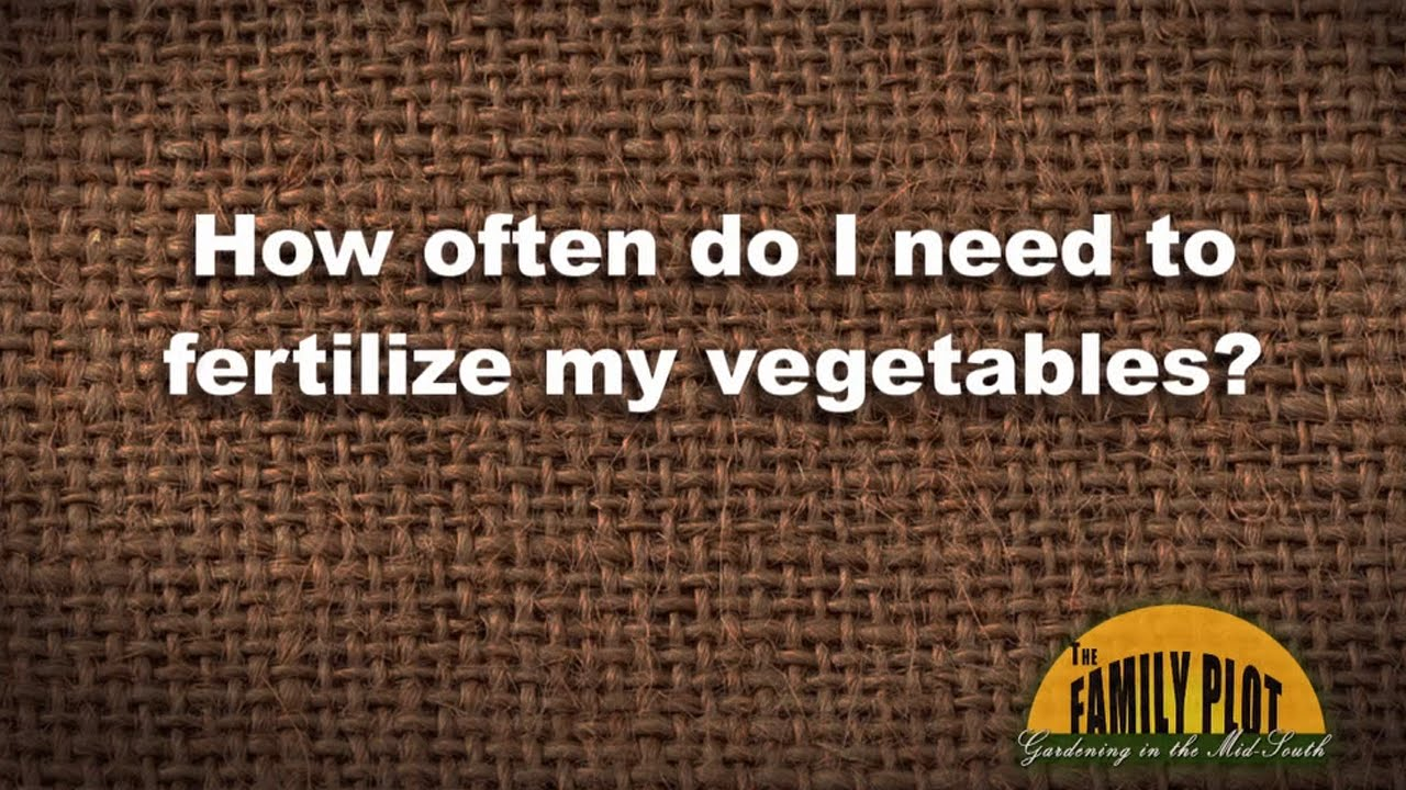 Q&A - How often do I need to fertilize vegetables? - YouTube