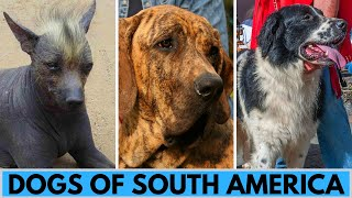 20 South American Dog Breeds