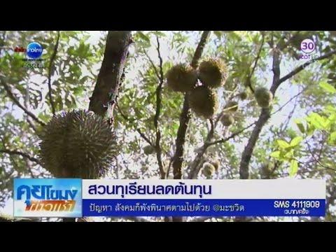 เกษตรสร้างชาติ : สวนทุเรียนลดต้นทุน | สำนักข่าวไทย อสมท