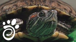 Интересные Факты О Черепахах. Все О Домашних Животных