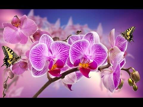 Romantic Piano Relaxing Music for Stress Relief, Meditation, Study, Healing