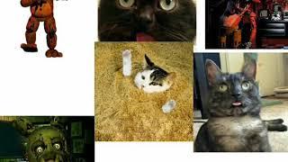 Фнаф и коты