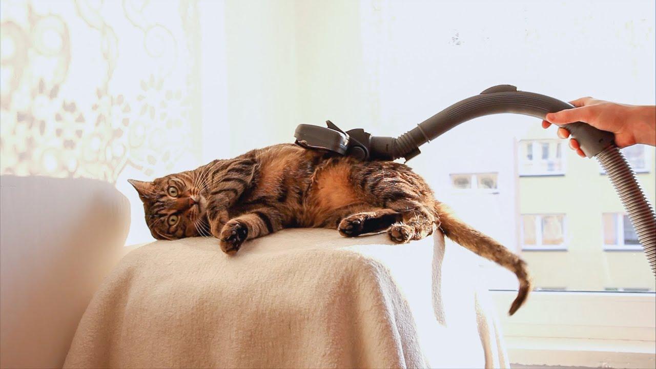 Cat At Vacuum Cleaner Spa Youtube