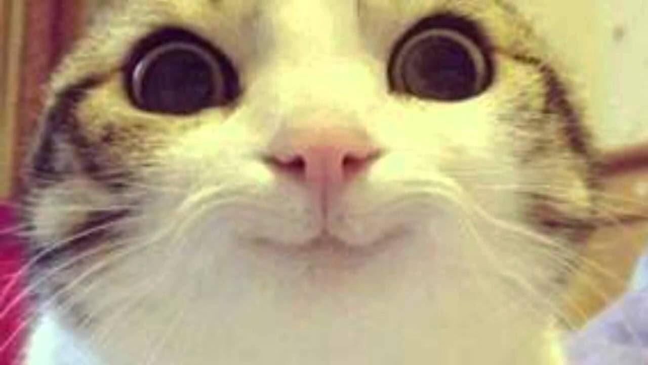 Kawaii Cat Live Stream