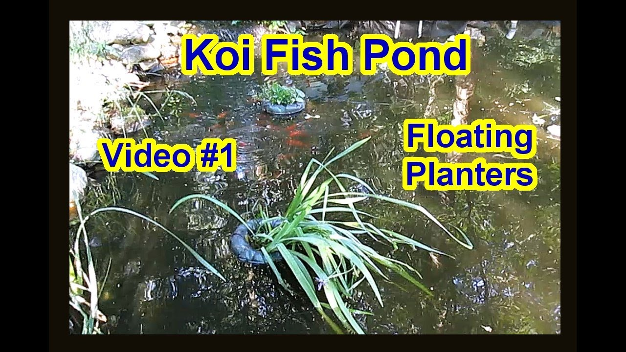 DIY - Fish Koi Pond Float Planter - Floating Planters - Flower Pot Plant