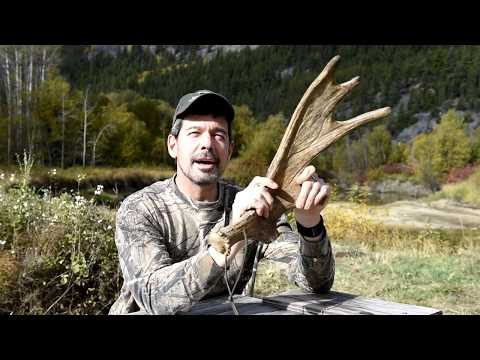 How To Call A Moose, Hunting Guides Techniques And Tutorial
