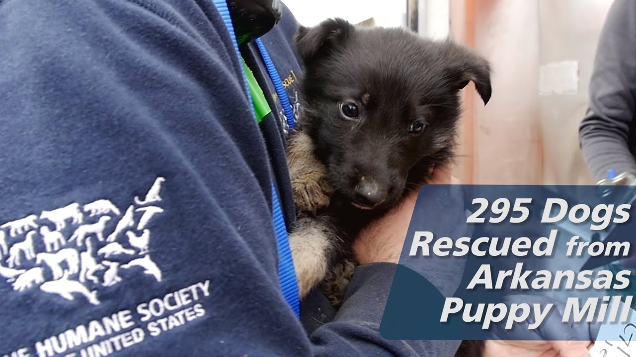 295 Dogs Rescued from Arkansas Puppy Mill