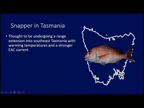 Snapper In Tasmania, Hobart Fisheries Forum Presentation 2