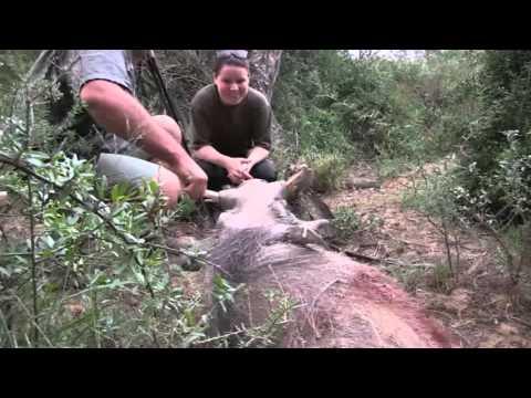African Hope Hunting Safaris 2016 Warthog