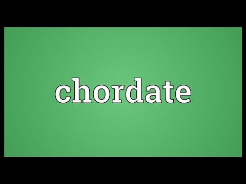 Chordate Meaning