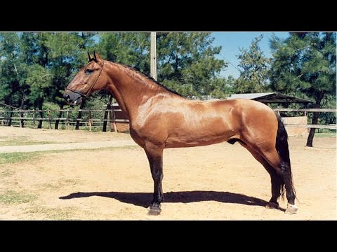 Curso Equoterapia - O Cavalo Ideal para Equoterapia