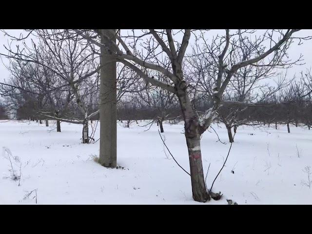 Ореховый сад -зима.