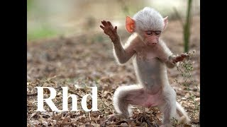 Gambar cover Baboons, Peaceful Primates - Nature 2018 HD Documentary.