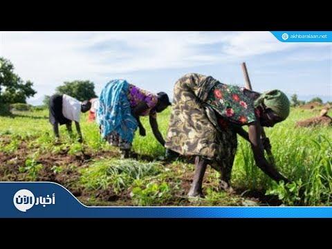 الفاو: الدودة الخبيثة قد تهدد الأمن الغذائي في آسيا  - 00:22-2018 / 8 / 15