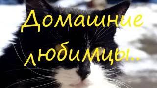 Коты.Домашние любимцы.