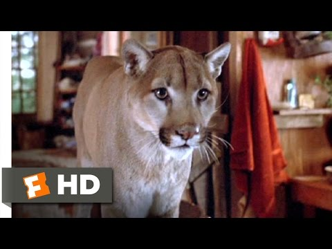 Continental Divide (7/9) Movie CLIP - A Cougar Problem (1981) HD