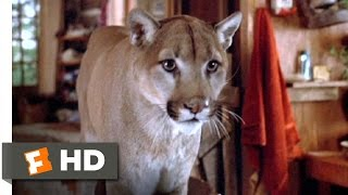 Continental Divide (7/9) Movie CLIP - A Cougar Problem (1981) HD