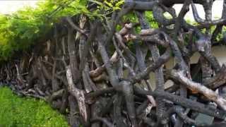 видео Живая изгородь из ивы: как сделать оригинальный забор на даче своими руками