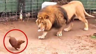Они Впустили Собаку в Клетку со Львом, То Что Случилось Поразило Всех