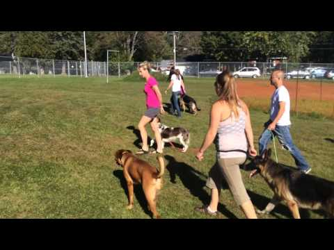Worst Dog Ever, Dog Training Seminar Great Testimonial