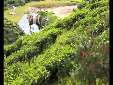Cameron Highlands by Sunny Tours Hatyai