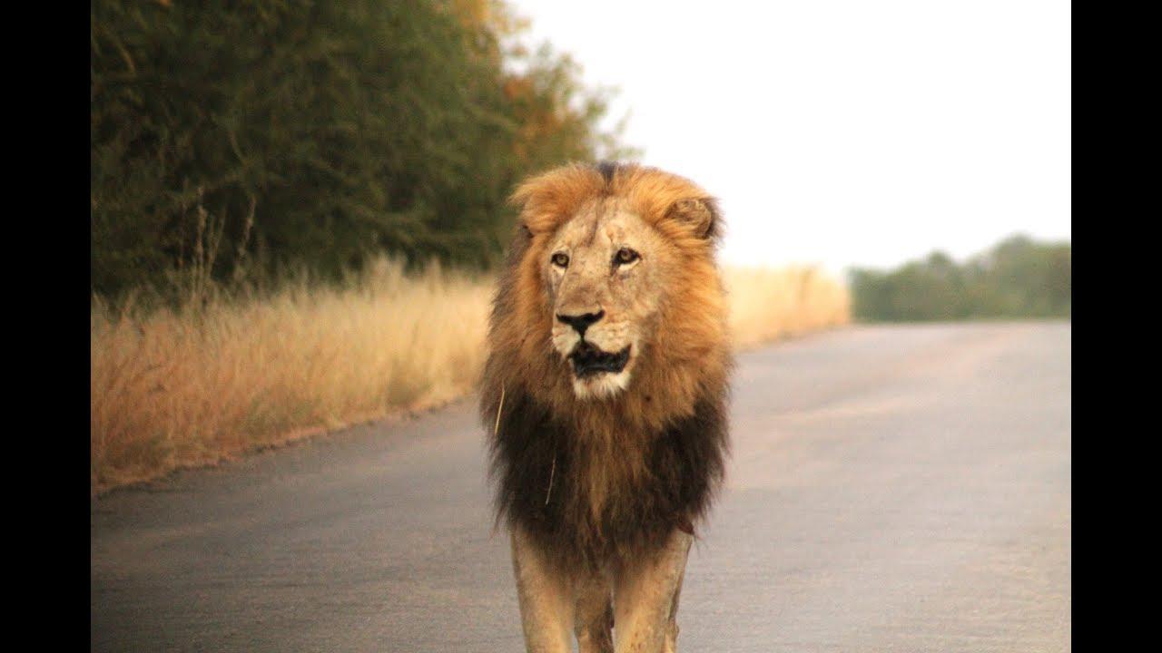 Kruger National Park South Africa 2019