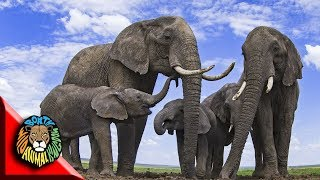 Wild Nature Amazon - Strange Animals Of Asia - National Geographic Documentary 2020 Hd