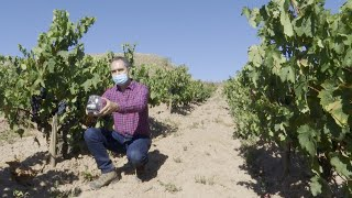 Consejo Regulador Rioja analiza los viñedos para la vendimia 2020