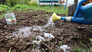 Если плохо растут овощи сделайте это осенью с землей!! Как безопасно раскислить почву осенью!?
