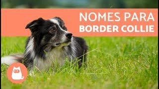 Nomes para Border COLLIE  Inspirese!