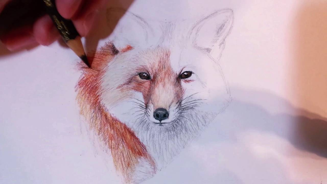 Red Fox Drawing Time Lapse Youtube