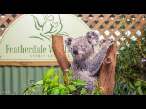 Tham Quan Featherdale Wildlife Park