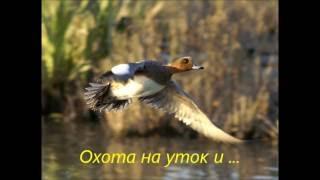 Охота на уток  Лесная кухня(Очередная охота на уток. И немного охотничьей кухни., 2016-09-26T14:48:53.000Z)