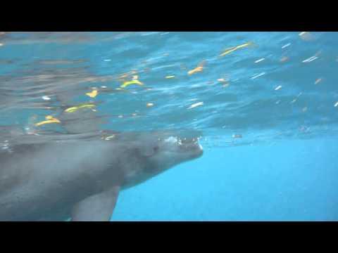 Snorkeling with dolphins in Zanzibar, Tanzania.