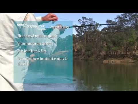 Fishing for Saratoga in the Rockhampton Region