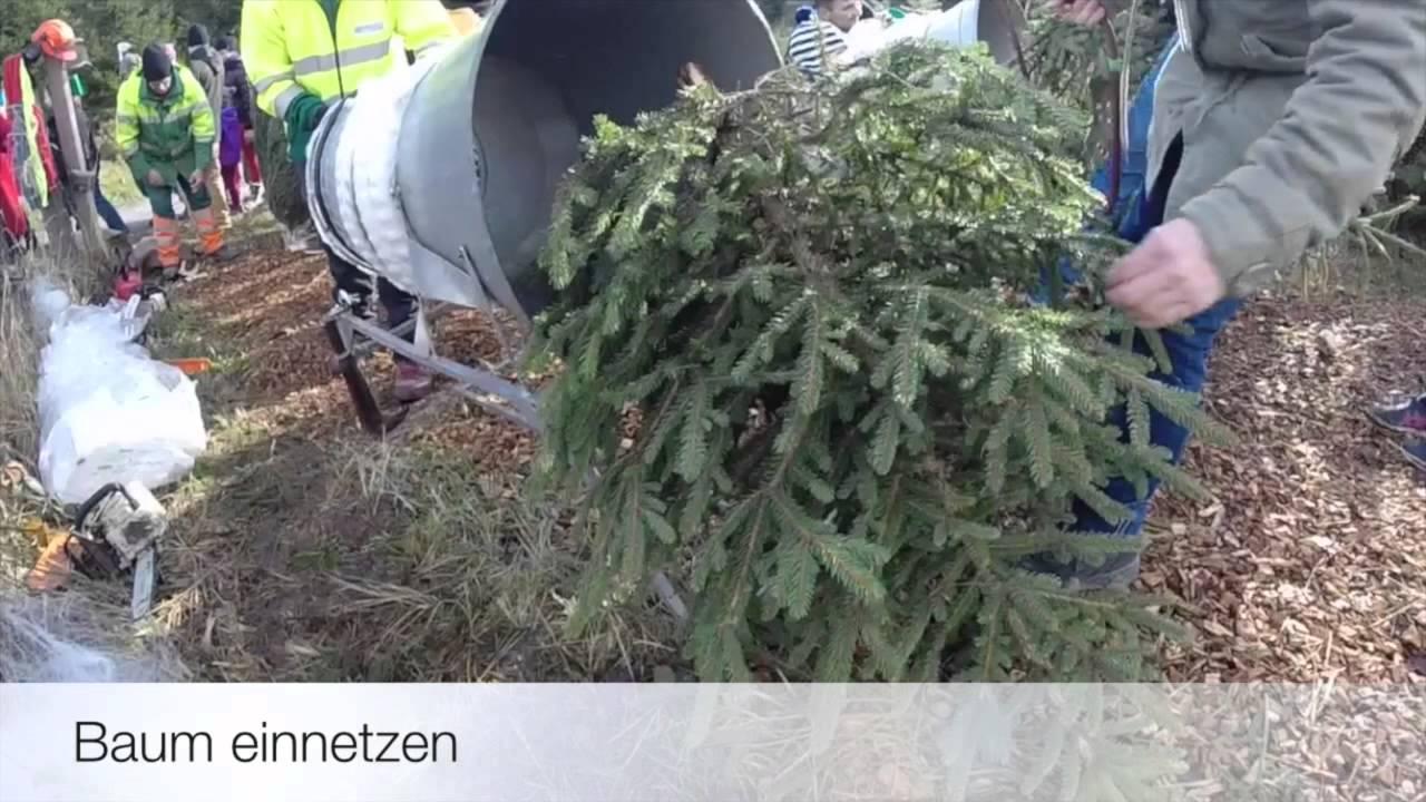 Weihnachtsbaum schneiden