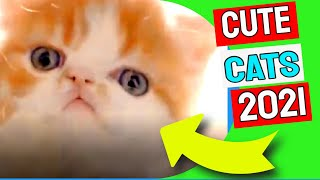 Cute Cat Videos 2021| Funny Cat Videos 2021 #002