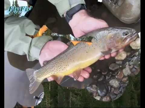 Horseback Riding | Fly Fishing | Yellowstone Park | Stillwater Outfitters | Cooke City, MT