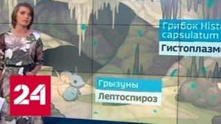 """Дети, спасенные из пещеры в Таиланде, могли заразиться """"пещерной болезнью"""" - Россия 24"""