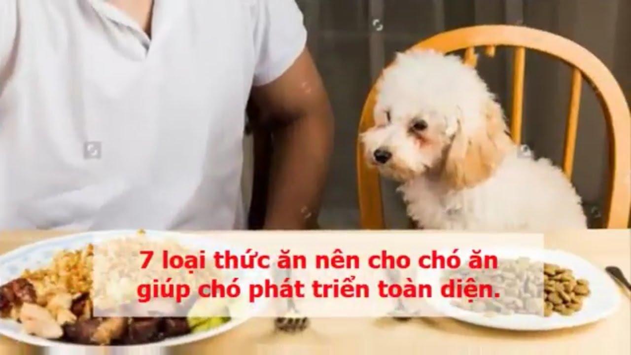 7 loại thức ăn nên cho chó ăn giúp chó phát triển toàn diện