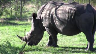 Matopos Zimbabwe + Rhino