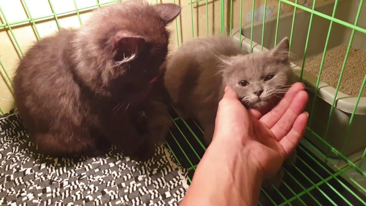 Cara Paling Ampuh Mengobati Scabies Pada Kucing 10 Hari Sembuh Youtube