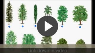 Ortak ağaç türleri