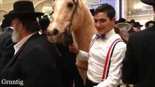 Horse and Llama Visit Monsey Jewish Wedding