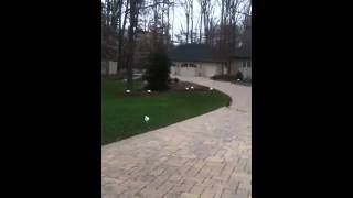 Invisible Fence  Dog Training In Potomac Maryland