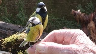 """""""A bird in the hand is worth two ticks off any list"""". I get far mor..."""