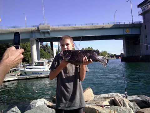 Fishonfishing june 19th blackfish fishing niantic ct for Fishing charters ct niantic