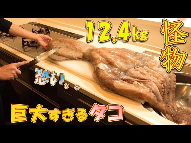 【大食い】12.4㎏の怪物サイズのタコを食す~デカい。怖い。美味しい。~