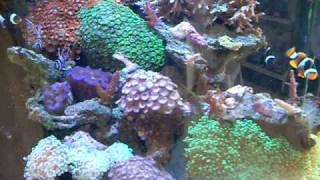 Aqua Euro 34 Gallon HQI Aquarium System - Circle Pet,  Long Beach, CA.avi